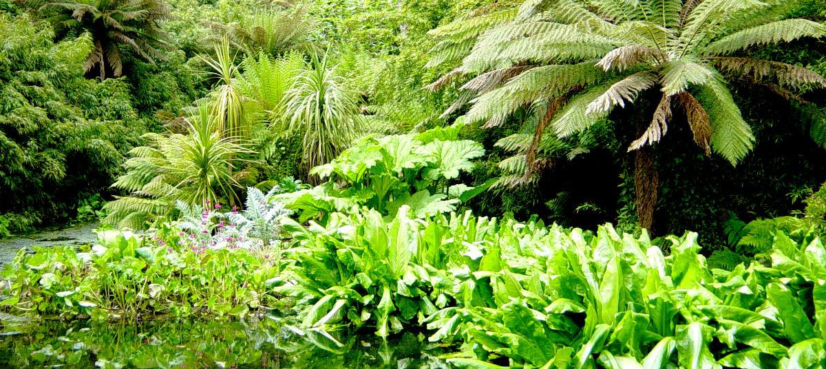 Jungle skov træer natur